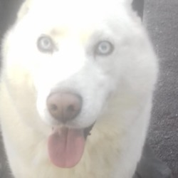 Reunited dog 19 Nov 2018 in  Rathkenny . UPDATE REUNITED...