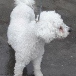 Reunited dog 19 Oct 2017 in Police Station , Clondalkin. UPDATE REUNITED....found, now in the dublin dog pound... Date Found: Wednesday, October 18, 2017 Location Found: Police Station , Clondalkin