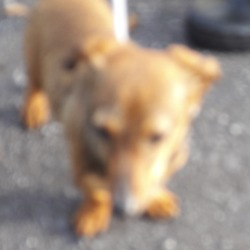 Found dog on 19 Oct 2018 in Corkagh Park.... found, now in the dublin dog pound..Date Found: 17/10/2018 Location Found: Corkagh Park