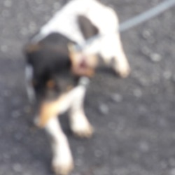 Found dog on 19 Oct 2018 in Corkagh Park. found, now in the dublin dog pound...Date Found: 17/10/2018 Location Found: Corkagh Park