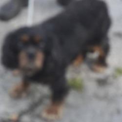 Found dog on 19 Oct 2018 in Palmerstown... found, now in the dublin dog pound..Date Found: 18/10/2018 Location Found: Village