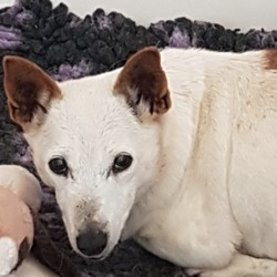 Found dog on 19 Oct 2018 in Tallaght.. found..DSPCA Page Liked · 19 hrs ·    Female older jack russell terrier found 15/10/18 in Tallaght.