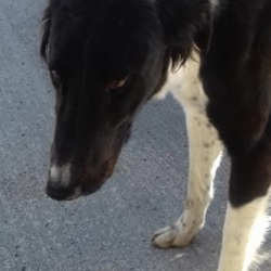 Found dog on 19 Sep 2019 in Duleek. found...Meath Dog Shelter September 17 at 2:15 PM ·  Stray ref 264 This young female lurcher was found in Duleek, proof of ownership and reclaim fee apply Contact 0870973911