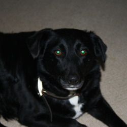 Found dog on 20 Jan 2010 in killiney/ballybrack. Black with White Chest Sheepdog Cross. Found Killiney/Ballybrack area. Please call 0868220662