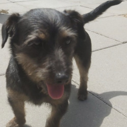 Found dog on 20 Jun 2021 in ballymun. found...ogs Aid tS2pondsorehdec  ·  Found in Ballymun. Now in dogs aid. Please ring dogs aid on 0872944310 if you recognise this dog.