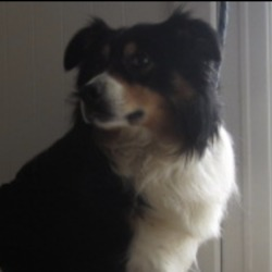 Found dog on 20 Mar 2020 in aughrim. found...Wicklow Dog Pound