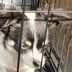 Found dog on 20 May 2021 in athy/. recovered from athy...Midwest Radio AtparSilSdpgg ongso9driedf  ·  Gardai have recovered sixteen dogs and pups which are believed to have been recently stolen. The dogs were found during searches at two houses in Athy today.   If you recognise these dogs or have any information contact Athy or Carlow Garda Station.