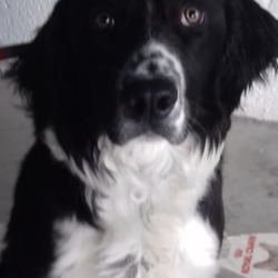 Reunited dog 20 Nov 2018 in Amberwood Ballivor Co.Meath . UPDATE OWNER FOUND...found...Meath Dog Shelter