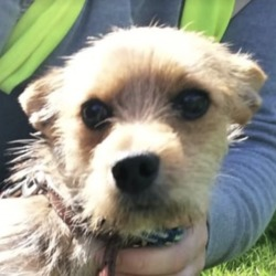 Found dog on 21 Aug 2019 in Dublin 8.. found..DSPCA Lost & Found Pets