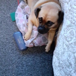 Reunited dog 21 Aug 2020 in Dungourney, Midleton Co Cork. REUNITED WITH OWNER 22/08/2020
