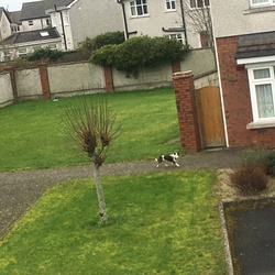 Found dog on 21 Feb 2020 in Newbridge, Co Kildare . Hi everyone, there is a dog wandering around in The Priory, Newbridge, Co Kildare. He/she is very disorientated and I am unable to even approach the dog as it's running away.