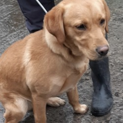 Found dog on 21 Feb 2020 in Tallaght.... found, now in the dublin dog pound...Date Found: 21/02/2020 Location Found: Tallaght