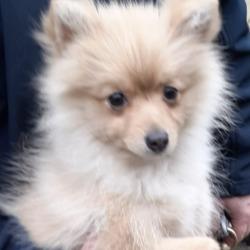 Found dog on 21 Feb 2020 in Tallaght. found, now in the dublin dog pound...Date Found: 19/02/2020 Location Found: Tallaght