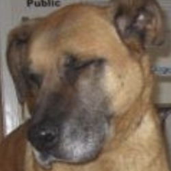 Found dog on 21 Jan 2019 in  Brittas Bay, Co. Wicklow. found...Wicklow Dog Pound 9 mins ·  is a male crossbreed found at Brittas Bay, Co. Wicklow. For further information please contact Wicklow Dog Pound at 0404-4487
