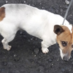 Found dog on 21 Jan 2019 in Village Palmerstown. found, now in the dublin dog pound...Date Found: