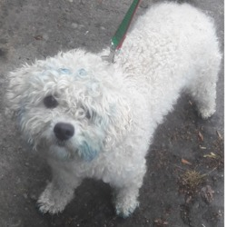 Found dog on 21 Jun 2018 in Lucan... found, now in the dublin dog pound...Date Found: 20/06/2018 Location Found: Lucan