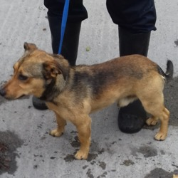 Found dog on 21 Jun 2018 in Square Tallaght. found, now in the dublin dog pound...Date Found: 20/06/2018 Location Found: Square Tallaght