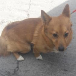 Found dog on 21 May 2018 in Balgady clondalkin. found... now in the dublin dog pound...Date Found: 18/05/2018 Location Found: Balgady