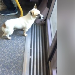 Found dog on 21 May 2019 in Tallaght . found...This poor dog got on the luas in Tallaght and got off at the hospital. He will be so scared and likely to get knocked down. If you see him please pick him up 😢Clondalkin Animal Aid