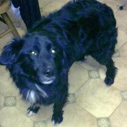 Reunited dog 21 Nov 2009 in Smarmore, Ardee, CO Louth. DOG FOUND: Black Collie, Red Collar, White marks on chest and front paw, Male, very well mannered, Contact:  Kellyann, 086 1726782