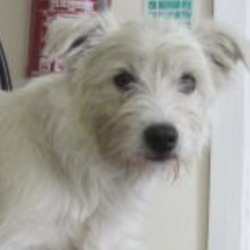 Found dog on 21 Nov 2018 in Ashford. found..Wicklow Dog Pound 4 mins ·  Female Westie crossbreed found in Ashford area. For further information please contact Wicklow Dog Pound at 0404-44873.