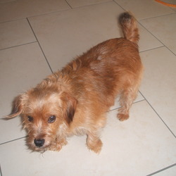 Reunited dog 21 Oct 2009 in East Wall / Fairview Dublin 3. This dog has been rehomed.