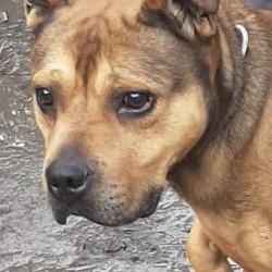 Reunited dog 21 Oct 2019 in Glenshane Tallaght. UPDATE OWNER FOUND..found, now in the dublin dog pound...Date Found: 17/10/2019 Location Found: Glenshane Tallaght