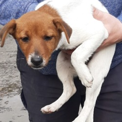 Found dog on 21 Oct 2019 in Old Castle Clondalkin. found, now in the dublin dog pound..Date Found: