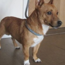 Found dog on 22 Aug 2018 in Bray area. found..is a male crossbreed found in the Bray area. Please contact Wicklow Dog Pound at 0404-44873 for further information.