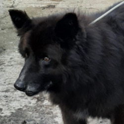 Reunited dog 22 Feb 2021 in Kingswood Tallaght. UPDATE REUNITED...found..now in the dublin dog pound...Date Found: