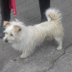 Found dog on 22 Jul 2018 in Tallaght Village. found, now in the dublin dog pound....Date Found: 18/07/2018 Location Found: Tallaght Village
