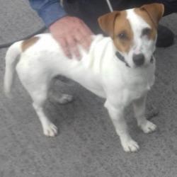 Found dog on 22 Jul 2019 in Citywest Saggart. found, now in the dublin dog pound...Date Found: 17/07/2019 Location Found: Citywest Saggart
