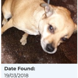 Reunited dog 22 Mar 2018 in Woodview Est, Lucan. UPDATE REUNITED...found, now in the dublin dog pound..Date Found: