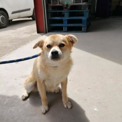 Found dog on 22 May 2019 in Ballivor Co.Meath. found..Meath Dog Shelter Yesterday at 2:09 PM ·  STRAY REF 254 FOUND IN Ballivor Co.Meath Not chipped no collar.only about a year old Proof of Ownership Required Phone 0870973911