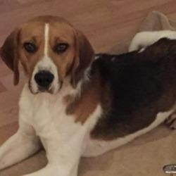 Found dog on 22 Oct 2019 in ashton. found.. Irish pound dogs 3 mins ·  Found and gone to ashton pound