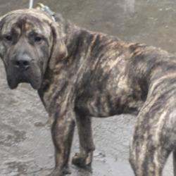 Found dog on 22 Oct 2020 in clondalkin. found, now in the dublin dog pound..Date Found: 20/10/2020 Location Found: Village