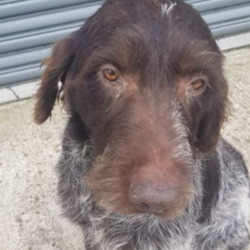 Found dog on 22 Oct 2020 in slane. found...Stray   Found in Grangegeeth, Slane. Very friendly dog, chipped to the breeder and no name tag. Reclaim fee and proof of ownership apply. Contact 0870973911 between 10 and 2.30 monday to saturday Meath Dog Shelter 12th oct·
