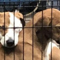 Found dog on 22 Oct 2020 in St Margaret's. found...Dogs Aid  ·  Also found in St Margaret's, safe with finder