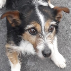 Found dog on 23 Apr 2019 in clondalkin... found, now in the dublin dog pound..Date Found: