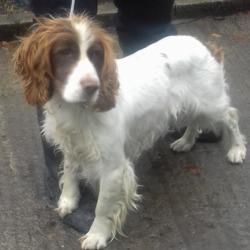 Found dog on 23 Jul 2018 in Avonbeg Gardens. found, now in the dublin dog pound...Date Found: 20/07/2018 Location Found: Avonbeg Gardens