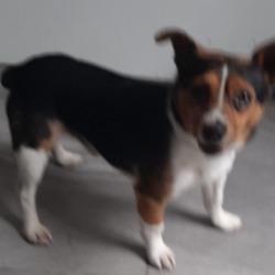 Found dog on 23 Jun 2020 in Rathfarnham. found, now in the dublin dog pound...Date Found: 21/06/2020 Location Found: Rathfarnham
