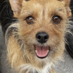 Found dog on 23 May 2019 in Tamerisk Est. found, now in the dublin dog pound..Date Found: 21/05/2019 Location Found: Tamerisk Est