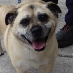 Found dog on 23 Sep 2021 in ATHBOY. Meath Dog Shelter 9m  ·  STRAY FOUND JAMESTOWN ATHBOY Collar no ID tag. Chipped but not registered. Proof of ownership & fee required to reclaim Phone for appointment 0870973911  Mon to Sat 10am to 3pm.
