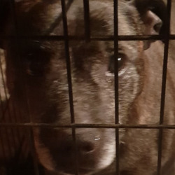 Found dog on 23 Sep 2021 in navan... found..Dog rescue coolronan 10muposoedi  ·  Older female staffie found in Navan tonight. No chip but is in good condition very sweet little girl anyone recognise her