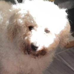 Found dog on 23 Sep 2021 in Rathfarnham. found, now in the dog pound...Date Found: 23/09/2021 Location Found: Rathfarnham
