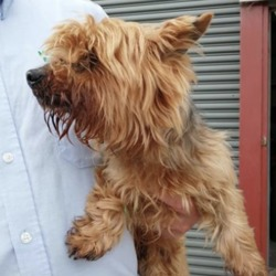 Found dog on 24 Aug 2019 in navan. found...Meath Dog Shelter is 