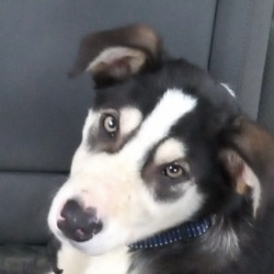 Found dog on 24 Feb 2021 in donabate. found  Dogs Trust Ireland Lost & Found Dogs tdShFrSpoebnruadogtry st20or amtilmn u6:r4ee2 AMmddfecS  ·  This puppy was found today about 2pm in Donabate North Dublin.. any help in finding his owners would great , a very friendly puppy .d....