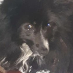 Found dog on 24 Jan 2019 in DROGHEDA, CO LOUTH. found...Drogheda Animal Rescue 2 hrs ·  YOUR COOPERATION IS NEEDED - STRAY BLACK DOG AT TESCO IN DROGHEDA, CO LOUTH  We are aware of a small black dog that has been hanging around the Tesco car park. We believe it has been dumped. We are trying to catch it and indeed it is difficult as it is scared.  PLEASE DO NOT FEED IT as we want it to be hungry in order to attract it to the animal traps.  We will of course update everyone if we manage to capture the poor little dog.  Thank you - The DAR Dog Team