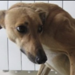Found dog on 24 Jun 2021 in wicklow. found...Wicklow Dog Pound JtSpcucnose nts2e1 srslate ofS9:51 arAdSfMeSdccn  ·  Jane (pound name) is a female lurcher found in Avoca. For further information please contact Wicklow Dog Pound on 0404 44873. Thank you