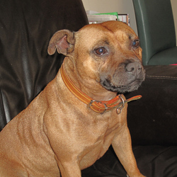 Found dog on 24 Oct 2009 in Swords. A dog (female) found on 24/10/2009, swords area, the nurseries.very friendly, with collar. Please contact me t.0868945499.